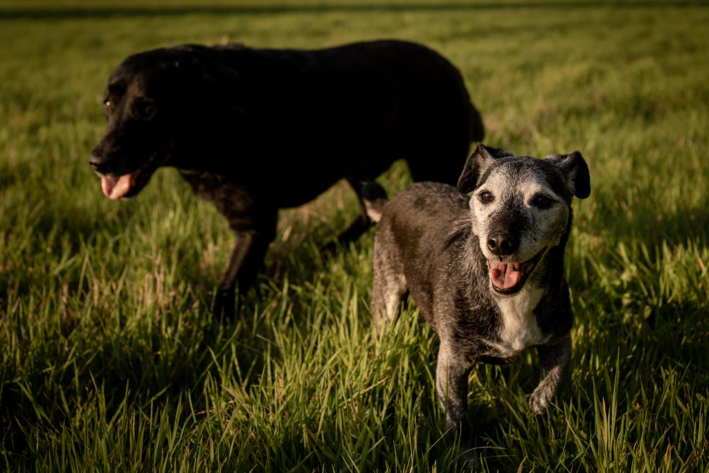 Dog photography in Hampshire, Dorset and New Forest